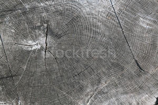 穀物 セクション 成長 リング ストックフォト © peterguess