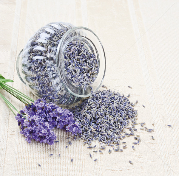 Zdjęcia stock: Lawendy · kwiaty · świeże · wyschnięcia · suszy · otwarte