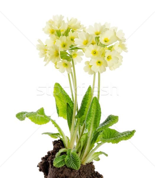 白 地球 種 開花 工場 家族 ストックフォト © PeterHermesFurian