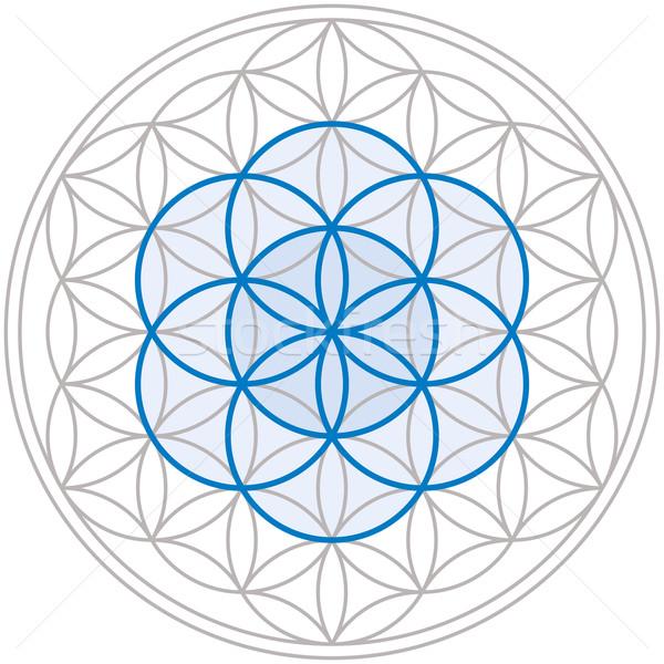 семени жизни цветок центр геометрический Рисунок Сток-фото © PeterHermesFurian