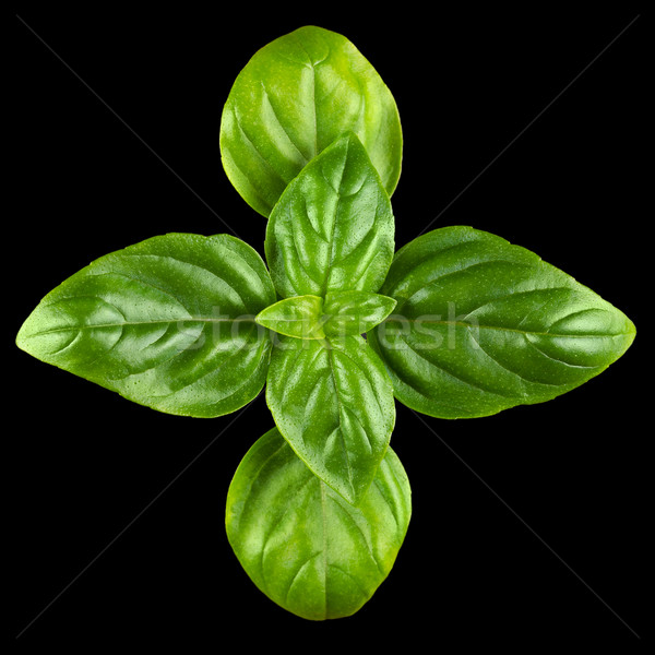 Young Sweet Basil Leaves From Above Stock photo © PeterHermesFurian