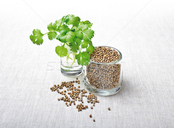 Coriander Leaves And Seeds - Cilantro Stock photo © PeterHermesFurian