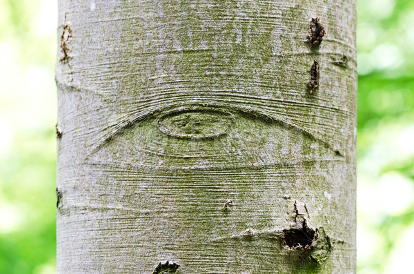 All-Seeing Eye of God on a tree bark Stock photo © PeterHermesFurian