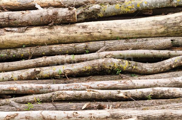 Régi fa boglya alsónadrágok konzerv használt fa Stock fotó © PeterHermesFurian