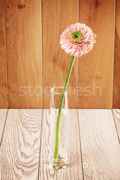 Pink Gerbera Daisy In Vase Stock photo © PetrMalyshev