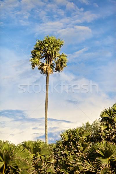 Jungle vert cocotier ciel bleu ciel Photo stock © PetrMalyshev