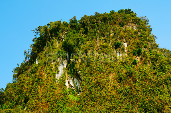 Tailandés montanas verde árboles krabi Tailandia Foto stock © PetrMalyshev