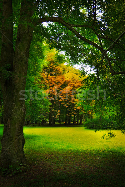 glade in forest Stock photo © PetrMalyshev