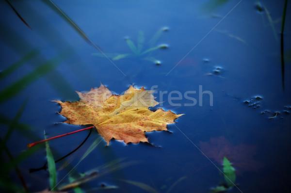 Stockfoto: Esdoornblad · water · najaar · gras · natuur · achtergrond