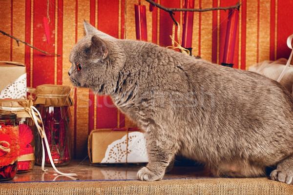 британский короткошерстная кошки синий домой интерьер Сток-фото © PetrMalyshev