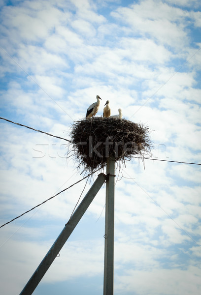 Ninho cegonha família céu aves animais Foto stock © PetrMalyshev