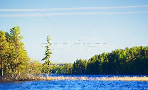 Día lago forestales verano Rusia agua Foto stock © PetrMalyshev