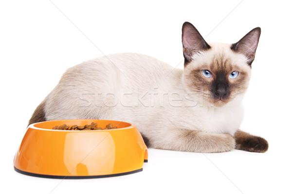 Thai Cat With Food Bowl Stock photo © PetrMalyshev