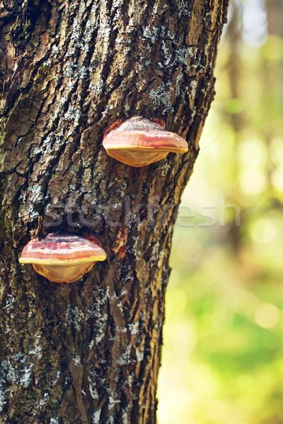 Grzyby drzewo trzon lasu zielone grupy Zdjęcia stock © PetrMalyshev