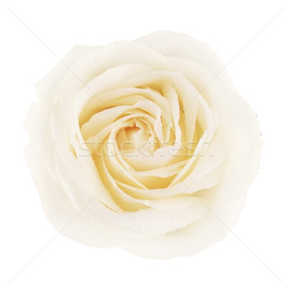 Stockfoto: Witte · steeg · bloem · room · geïsoleerd · top