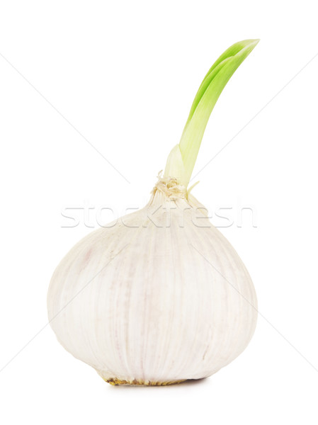 Garlic With Green Sprout Stock photo © PetrMalyshev