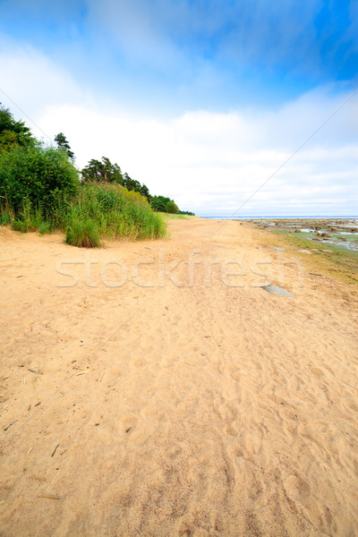 tropical seashore Stock photo © PetrMalyshev
