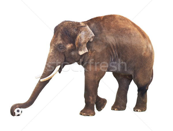 Elephant With Soccer Ball Stock photo © PetrMalyshev