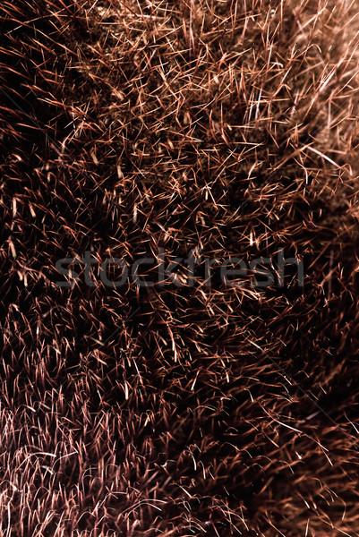 коричневый мех текстуры черный волна кожи Сток-фото © PetrMalyshev
