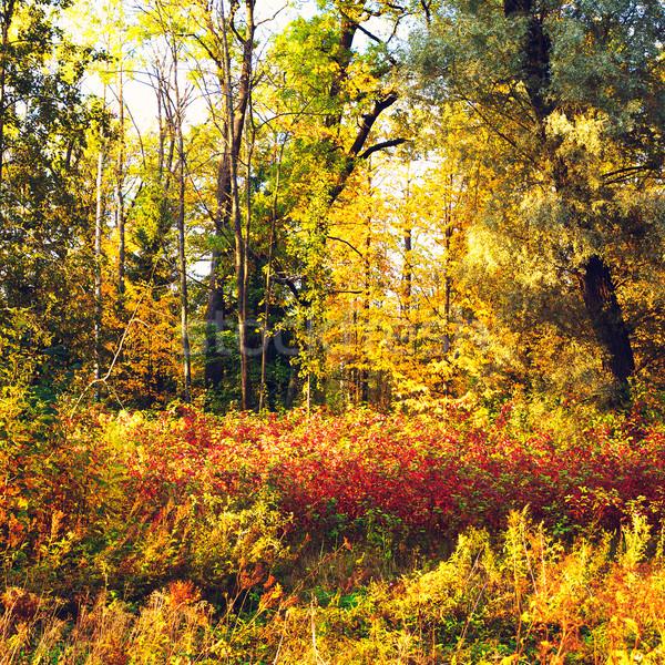 Zdjęcia stock: Jesienią · mieszany · lasu · piękna · drzewo