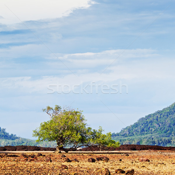 Rocky Shore Low Tide Stock photo © PetrMalyshev
