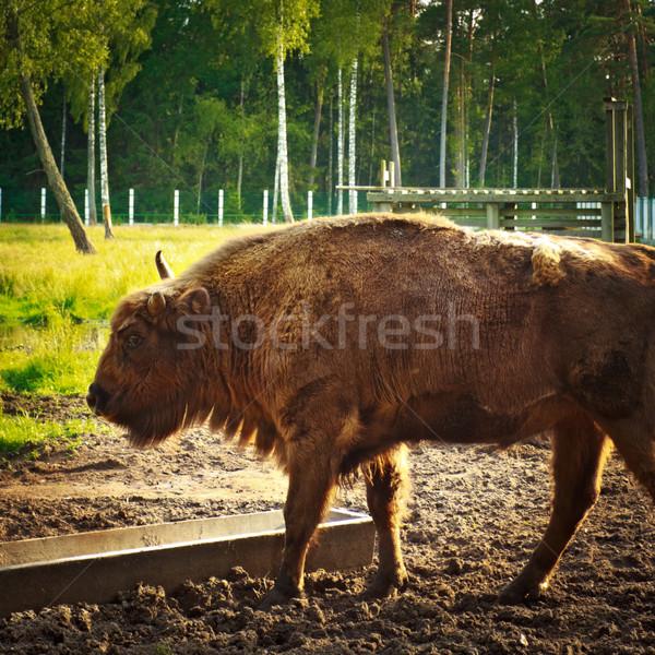 Animais selvagens grande grama natureza árvores parque Foto stock © PetrMalyshev