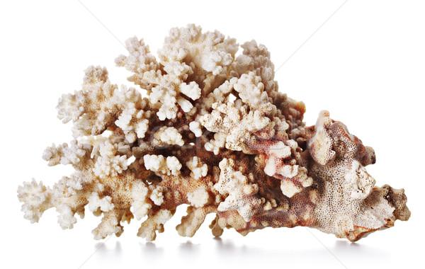 Belo coral cinza isolado branco abstrato Foto stock © PetrMalyshev