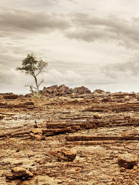 Rocky Shore With Tree Stock photo © PetrMalyshev