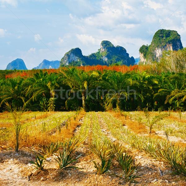 Taylandlı manzara yeşil ağaçlar krabi Tayland Stok fotoğraf © PetrMalyshev