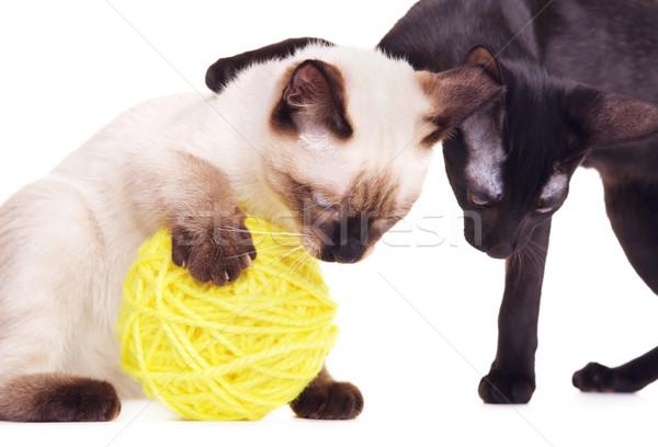 Twee katten spelen wollen bal Stockfoto © PetrMalyshev