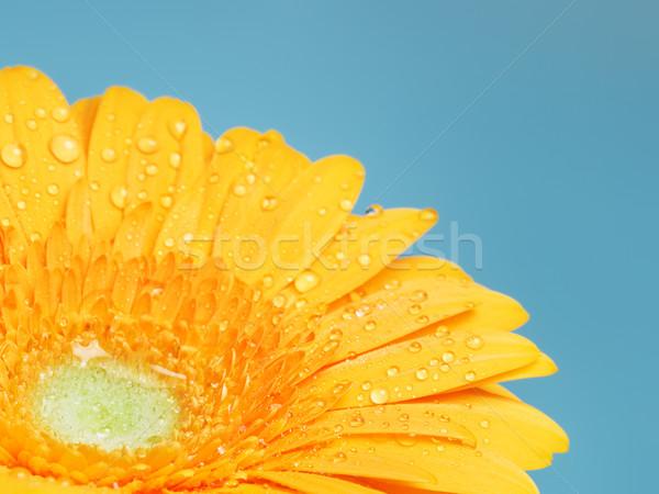 Foto stock: Amarelo · flor · belo · azul · água · natureza