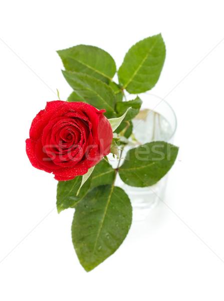 Rose Red vetro buio top view isolato Foto d'archivio © PetrMalyshev