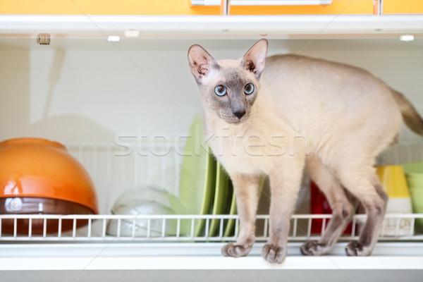 毛のない 猫 オリエンタル 皿 家 背景 ストックフォト © PetrMalyshev