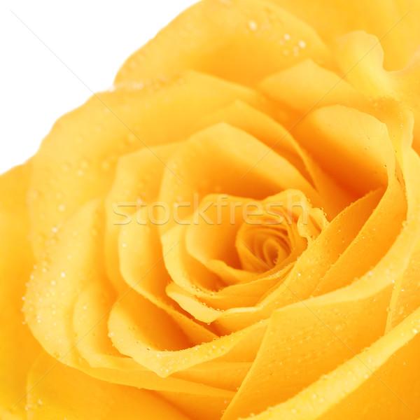 желтый закрывается цветок воды любви Сток-фото © PetrMalyshev