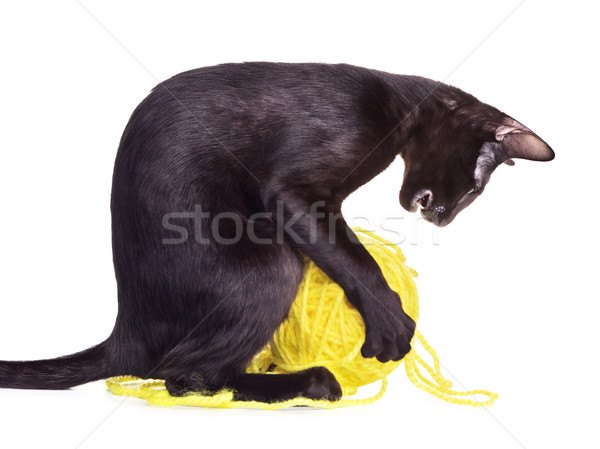 Black Oriental Shorthair Cat Playing With Woolen Ball Stock photo © PetrMalyshev