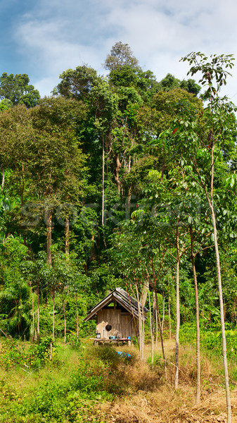 Thai Jungle Stock photo © PetrMalyshev