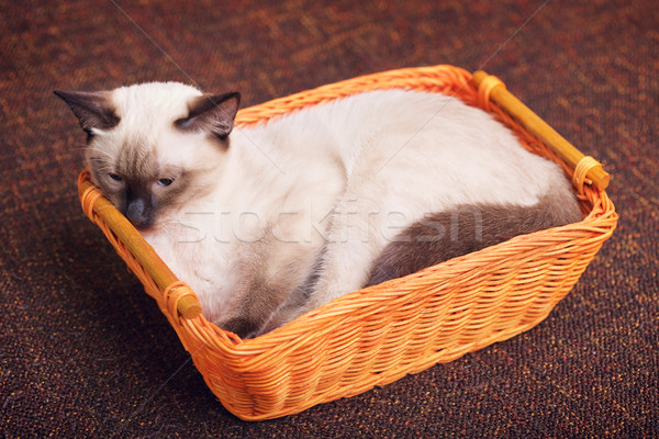 Thai Kitten In Wooden Basket Stock photo © PetrMalyshev