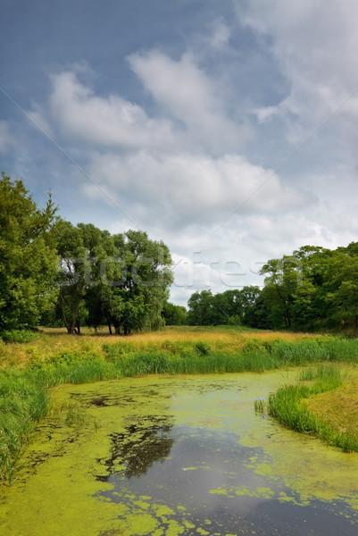 Сток-фото: реке · лес · лет · трава