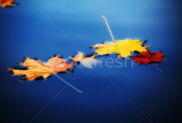 autumn maple leaves on water Stock photo © PetrMalyshev