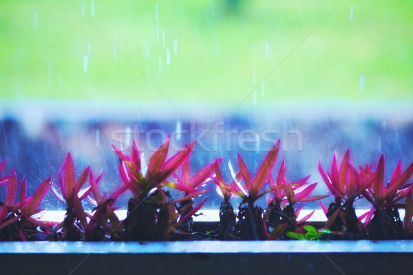 Flowers Under Rain Stock photo © PetrMalyshev