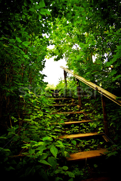 staircase in a thicket Stock photo © PetrMalyshev
