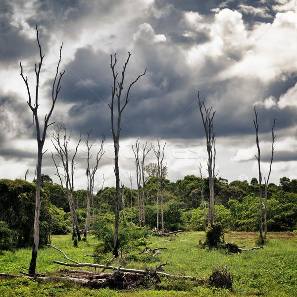 Száraz fák mocsár halott Krabi Thaiföld Stock fotó © PetrMalyshev