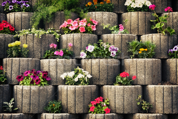 Stone Flowerbed Wall Stock photo © PetrMalyshev