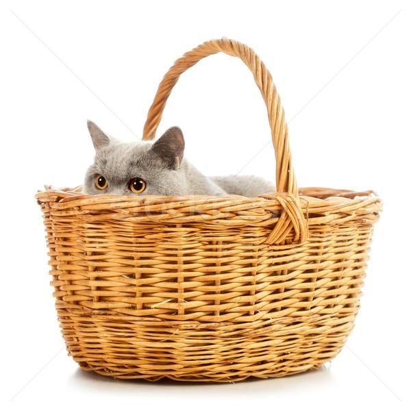 英国の ショートヘア 猫 青 バスケット 孤立した ストックフォト © PetrMalyshev