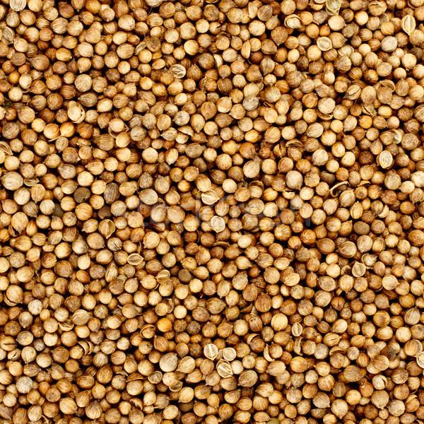 кориандр семян многие изолированный белый фото Сток-фото © PetrMalyshev