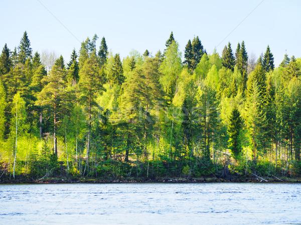 Forestales río costa verano día nubes Foto stock © PetrMalyshev