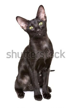 черный короткошерстная кошки портрет изолированный Сток-фото © PetrMalyshev