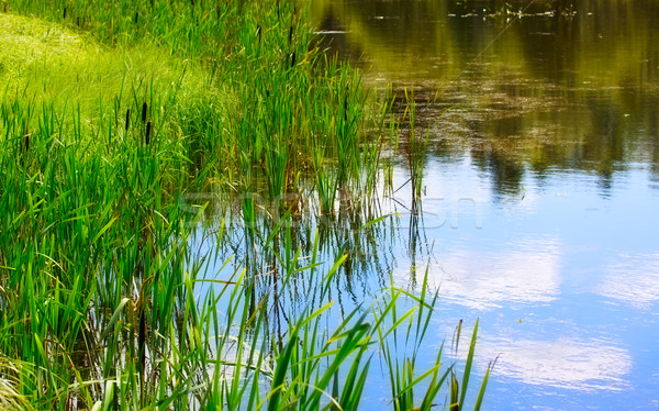 Pond And Water Plants Stock photo © PetrMalyshev