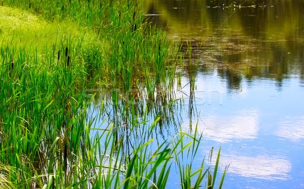 Vijver water planten zomer dag hemel Stockfoto © PetrMalyshev