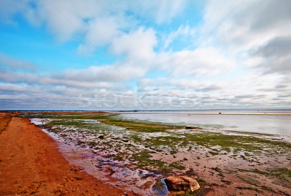 Beach In Summer Stock photo © PetrMalyshev